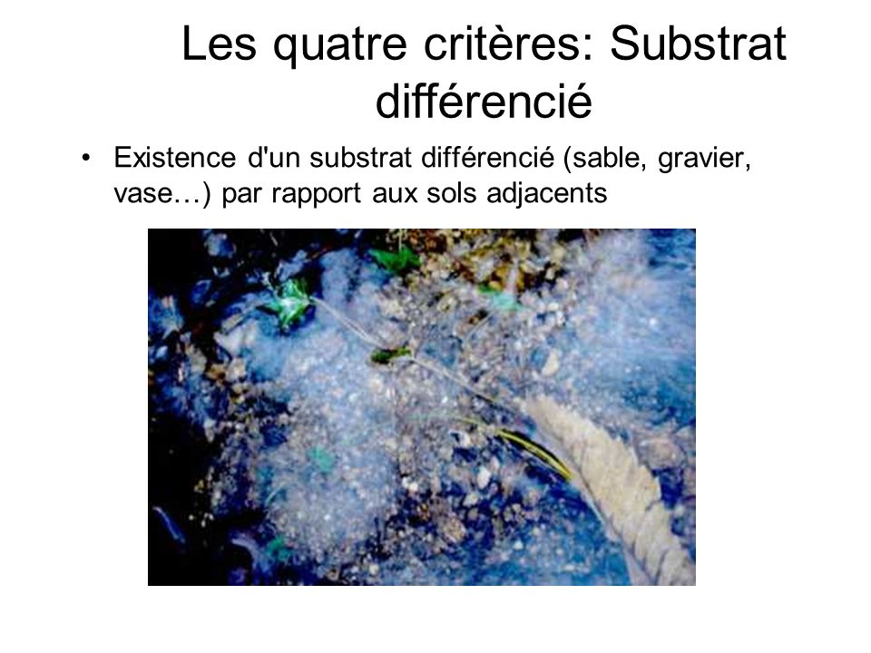 Les quatre critères: Substrat différencié