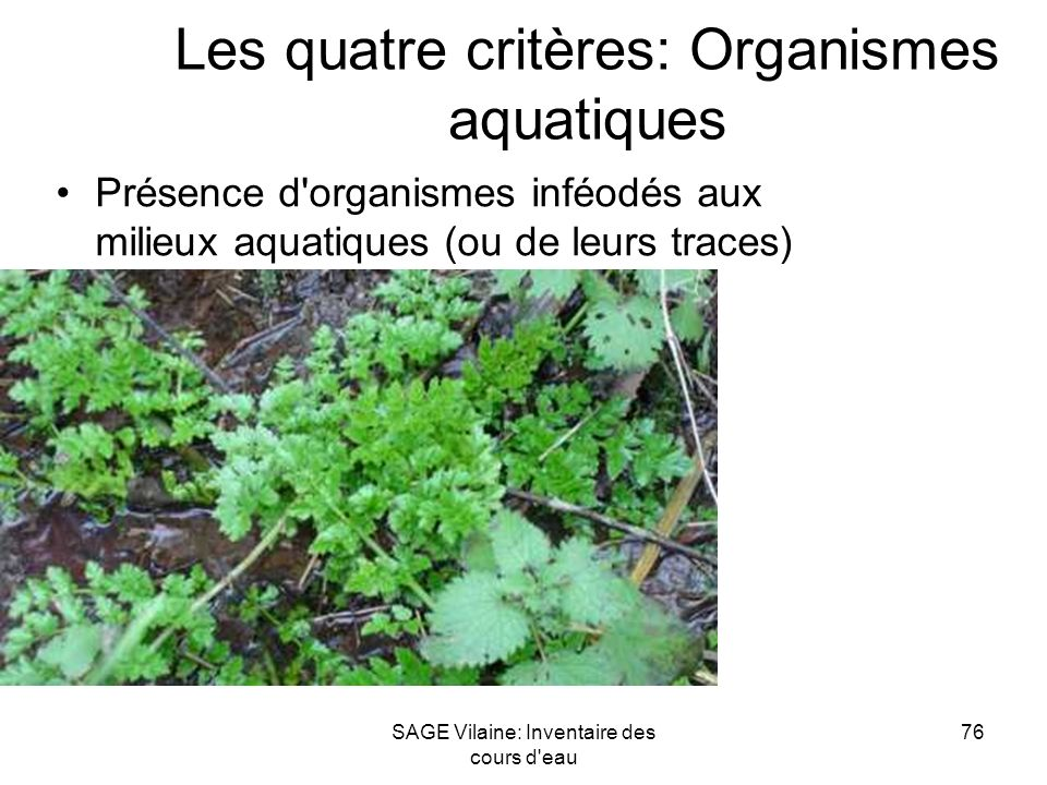 Les quatre critères: Organismes aquatiques
