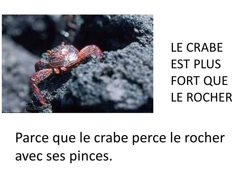 Parce que le crabe perce le rocher avec ses pinces.