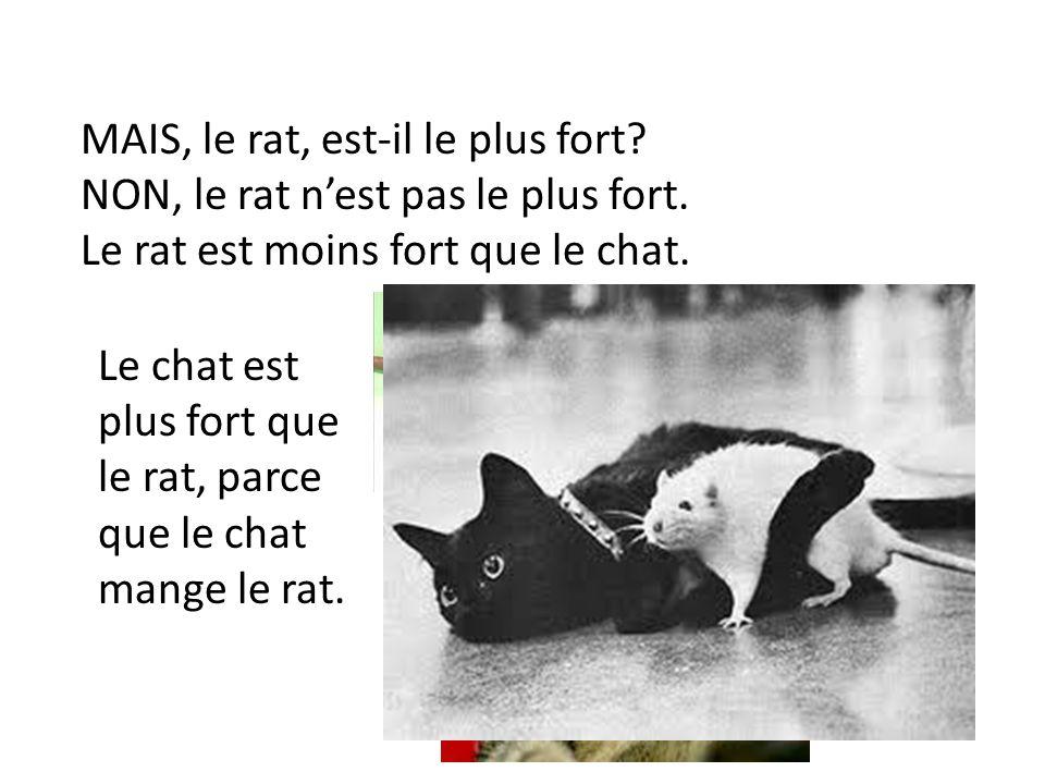 MAIS, le rat, est-il le plus fort
