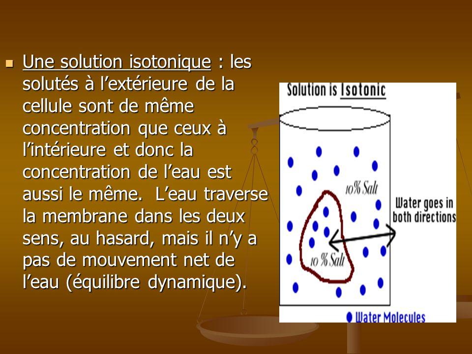 Une solution isotonique : les solutés à l'extérieure de la cellule sont de même concentration que ceux à l'intérieure et donc la concentration de l'eau est aussi le même.