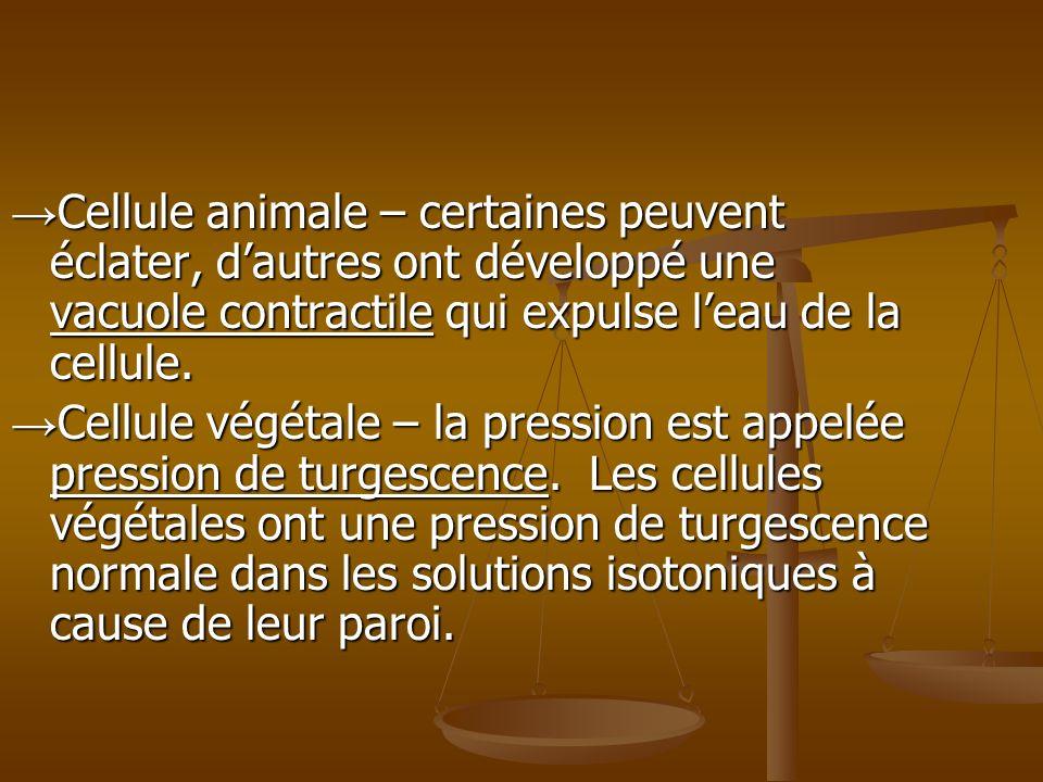 →Cellule animale – certaines peuvent éclater, d'autres ont développé une vacuole contractile qui expulse l'eau de la cellule.