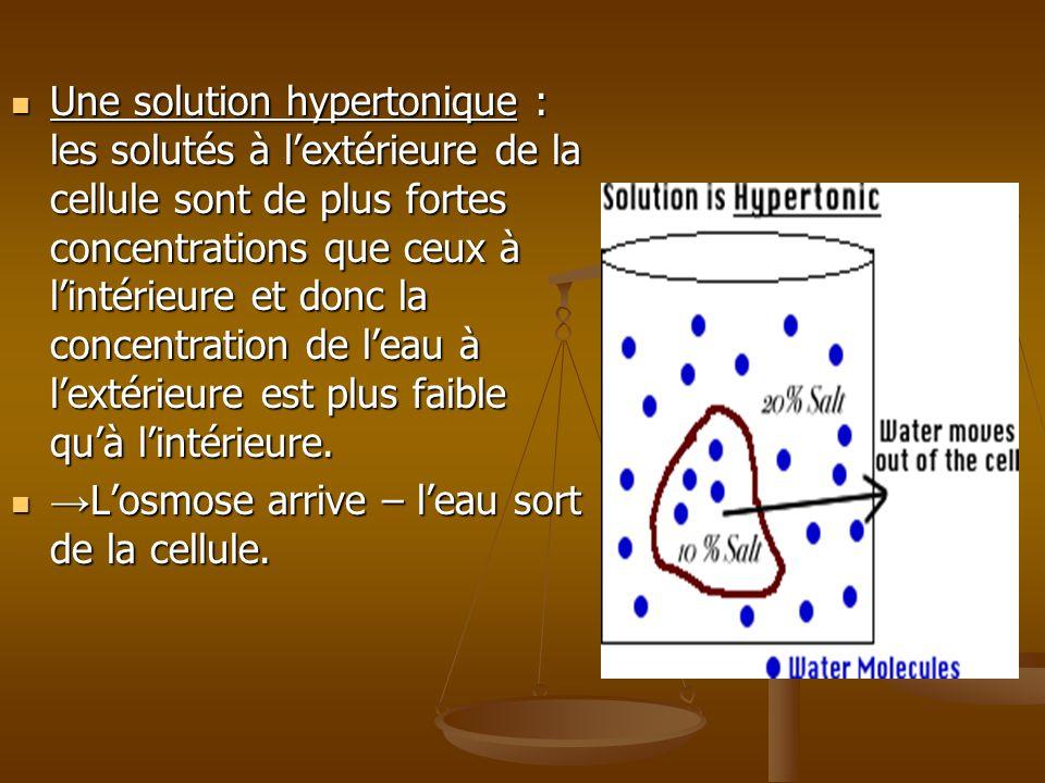 Une solution hypertonique : les solutés à l'extérieure de la cellule sont de plus fortes concentrations que ceux à l'intérieure et donc la concentration de l'eau à l'extérieure est plus faible qu'à l'intérieure.