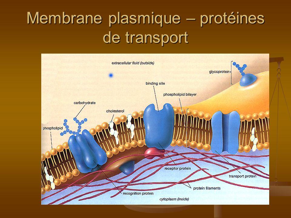 Membrane plasmique – protéines de transport