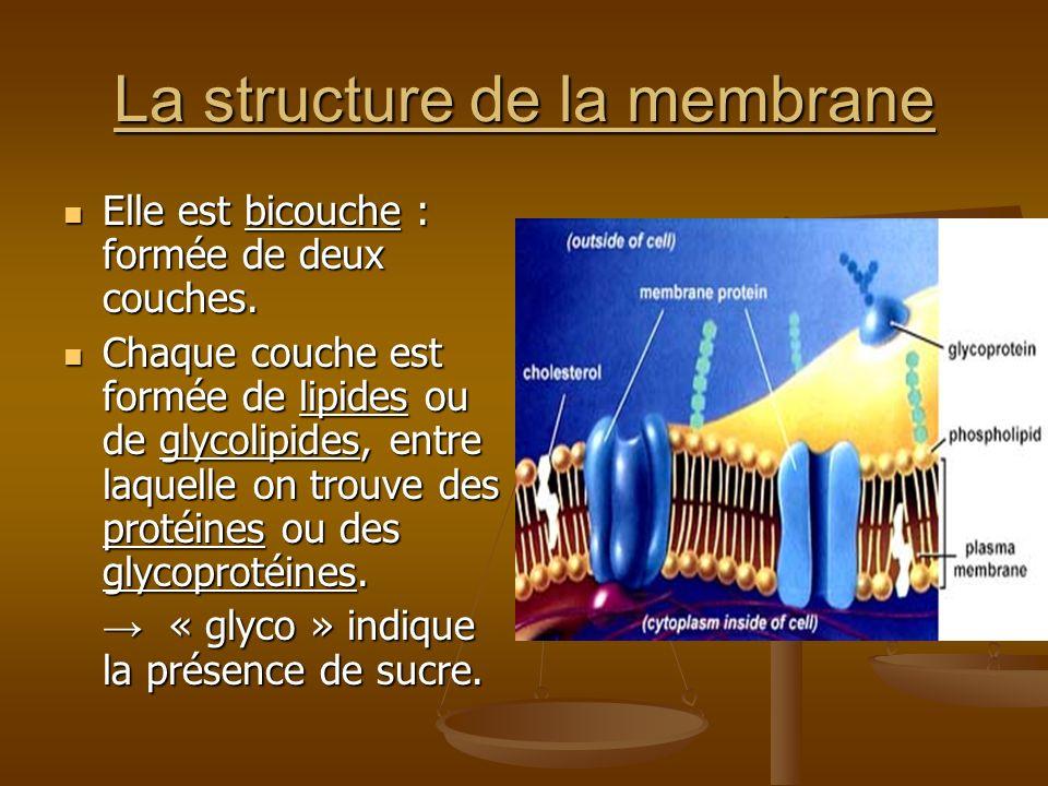La structure de la membrane