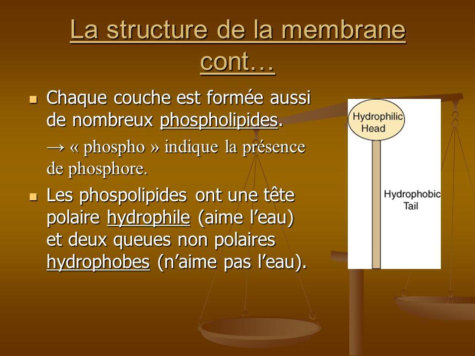 La structure de la membrane cont…
