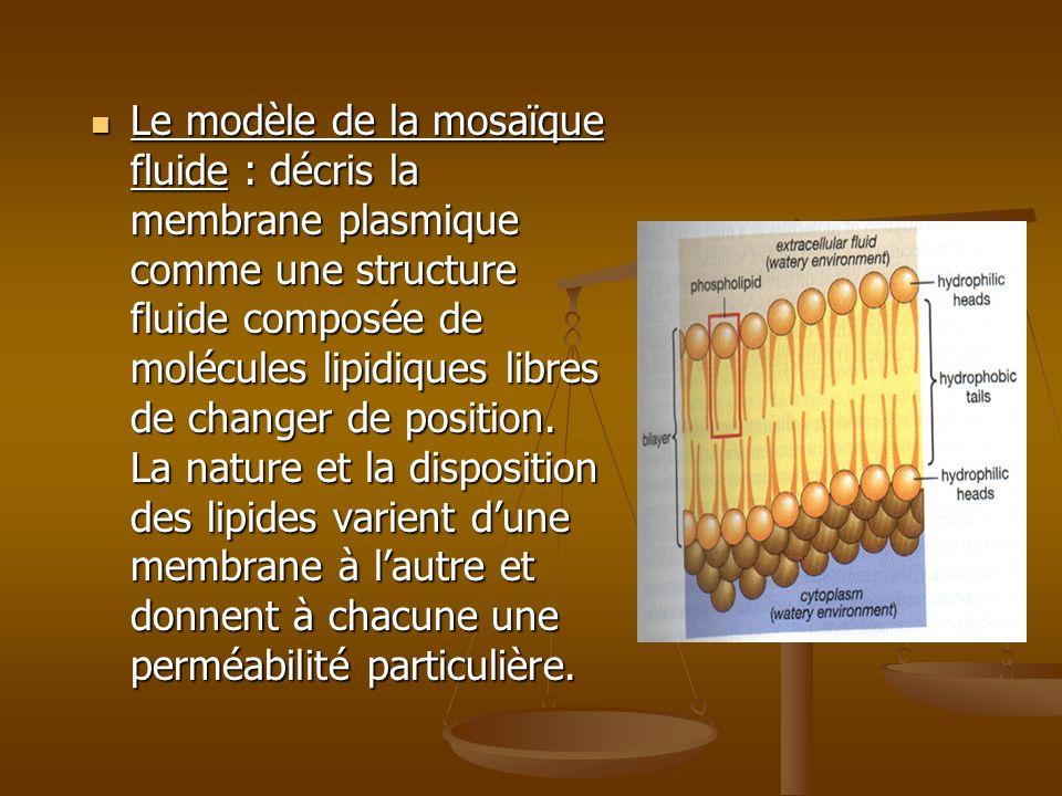 Le modèle de la mosaïque fluide : décris la membrane plasmique comme une structure fluide composée de molécules lipidiques libres de changer de position.