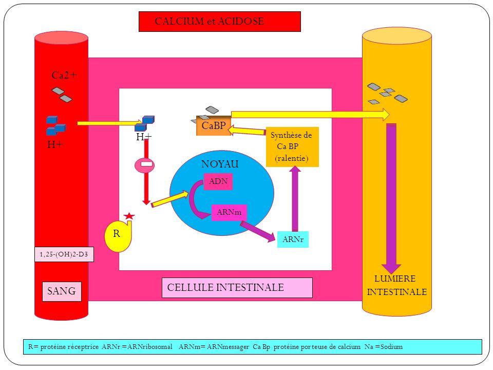 CALCIUM et ACIDOSE Ca2+ CaBP H+ H+ NOYAU R CELLULE INTESTINALE SANG