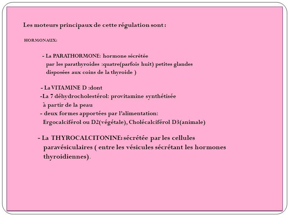 paravésiculaires ( entre les vésicules sécrétant les hormones