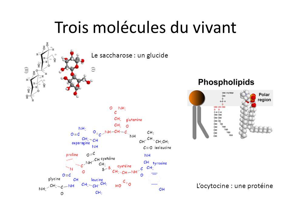 Trois molécules du vivant