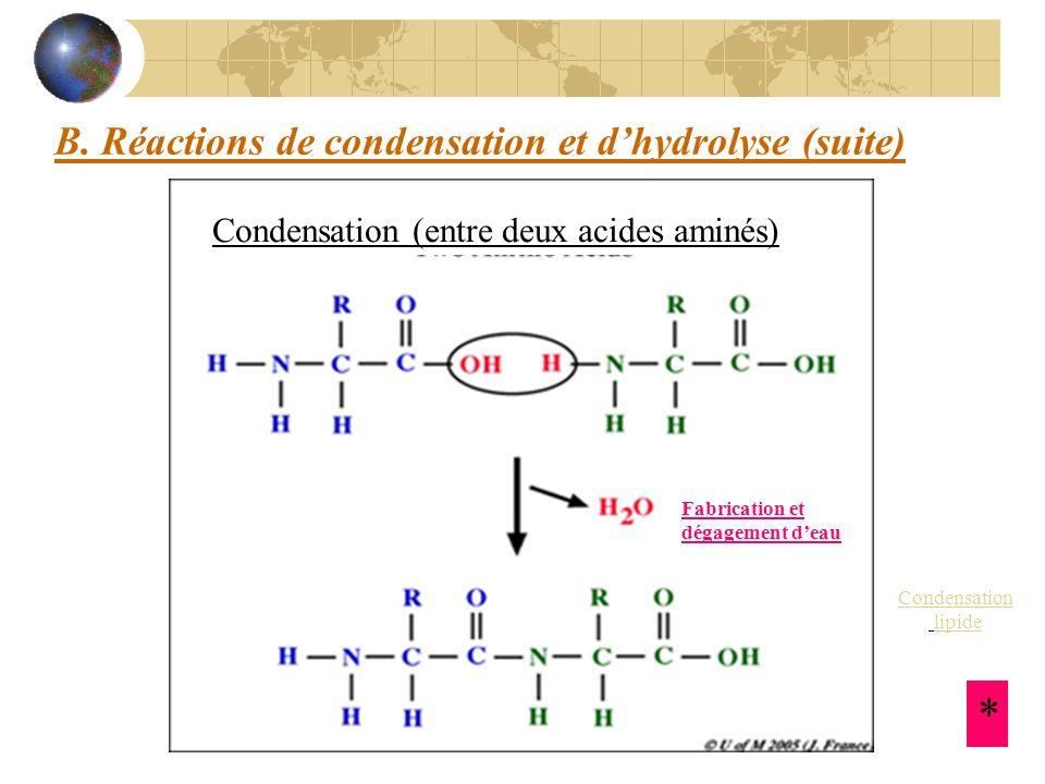 B. Réactions de condensation et d'hydrolyse (suite)