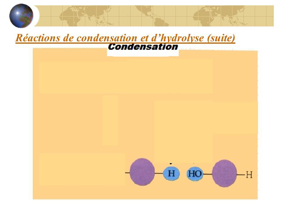 Réactions de condensation et d'hydrolyse (suite)