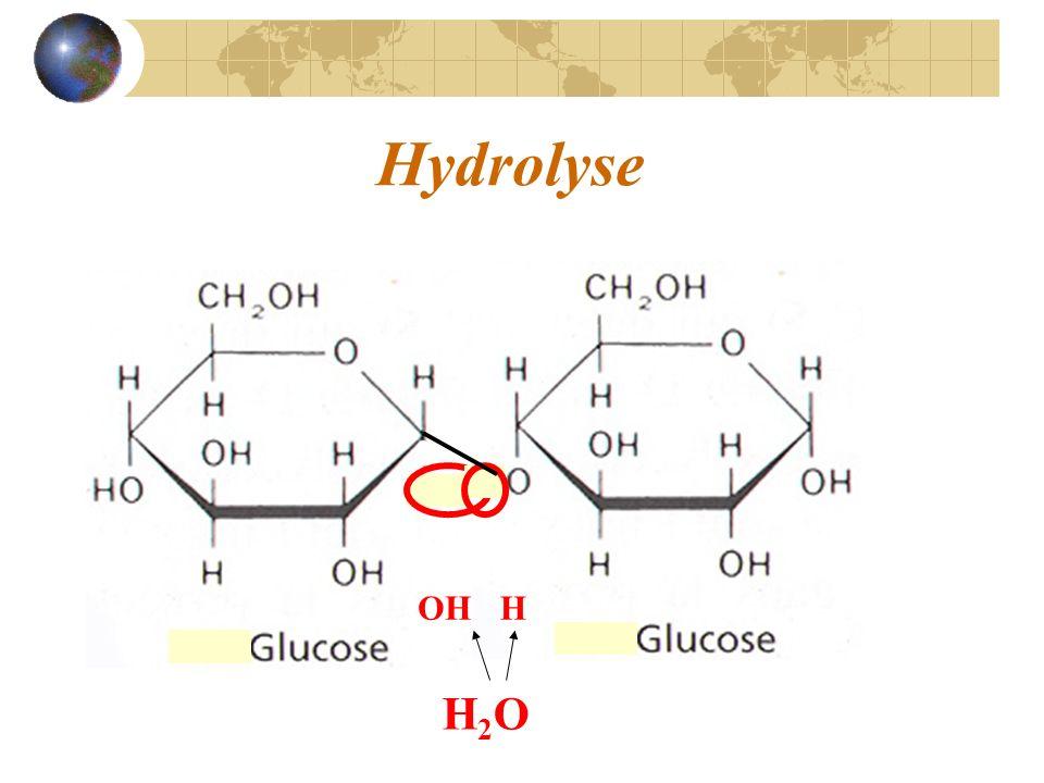Hydrolyse OH H H2O