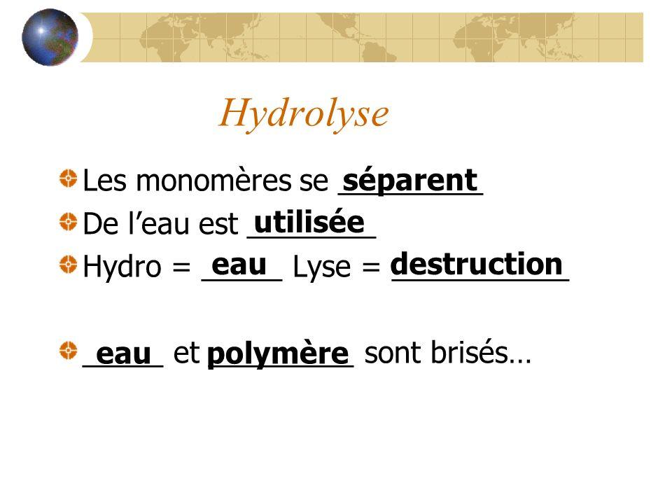 Hydrolyse Les monomères se _________ De l'eau est ________