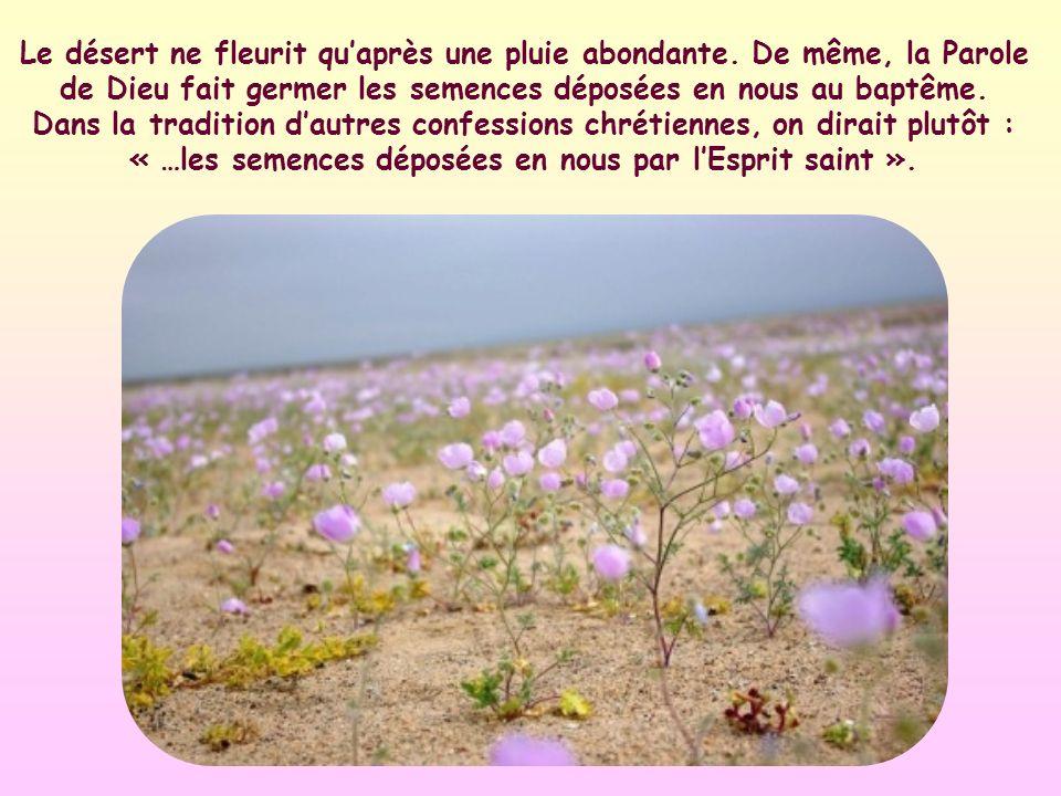 Le désert ne fleurit qu'après une pluie abondante