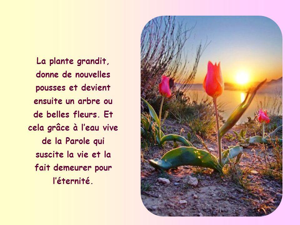 La plante grandit, donne de nouvelles pousses et devient ensuite un arbre ou de belles fleurs.