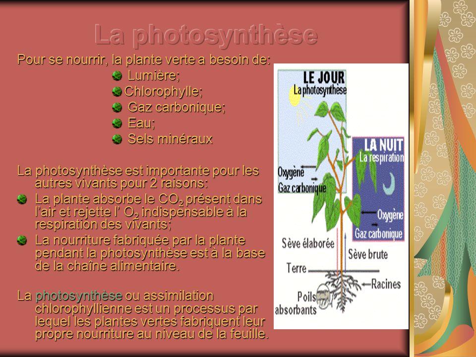 La photosynthèse Pour se nourrir, la plante verte a besoin de: