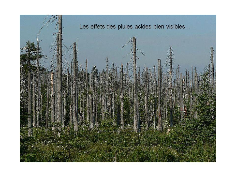 Les effets des pluies acides bien visibles…