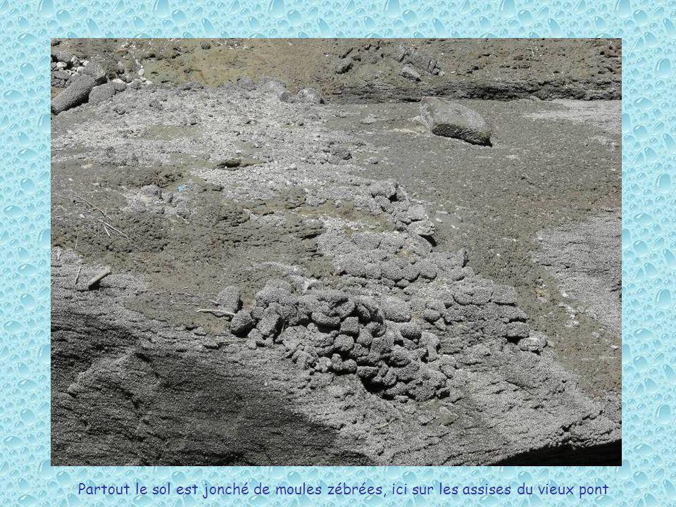 Partout le sol est jonché de moules zébrées, ici sur les assises du vieux pont