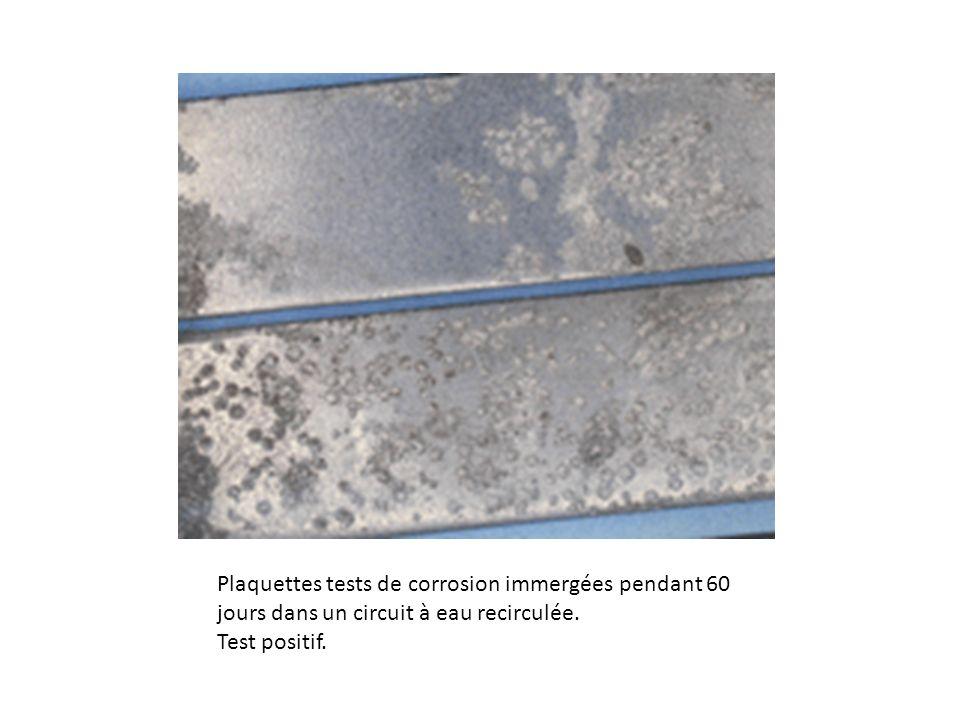 Plaquettes tests de corrosion immergées pendant 60 jours dans un circuit à eau recirculée.