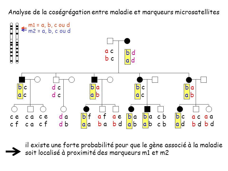 Analyse de la coségrégation entre maladie et marqueurs microsatellites