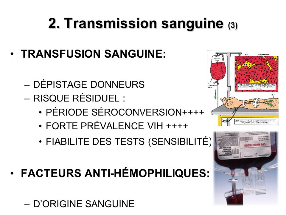 2. Transmission sanguine (3)