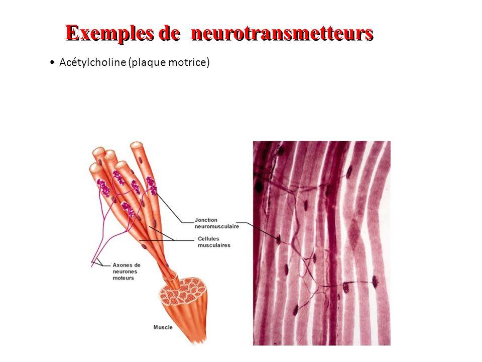 Exemples de neurotransmetteurs