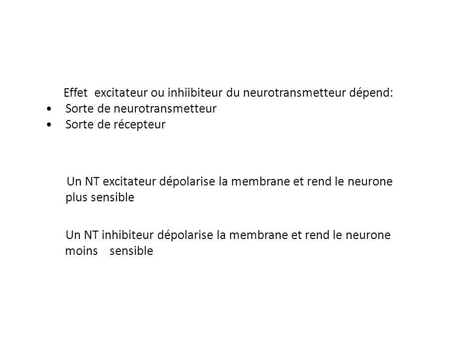 Effet excitateur ou inhiibiteur du neurotransmetteur dépend: