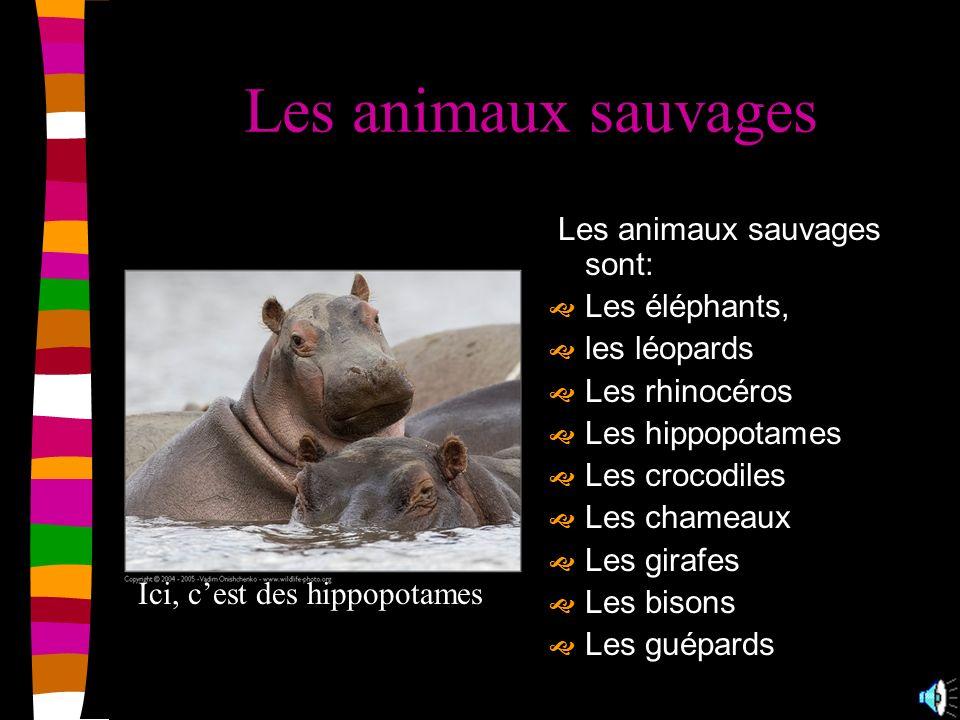 Les animaux sauvages Les animaux sauvages sont: Les éléphants,