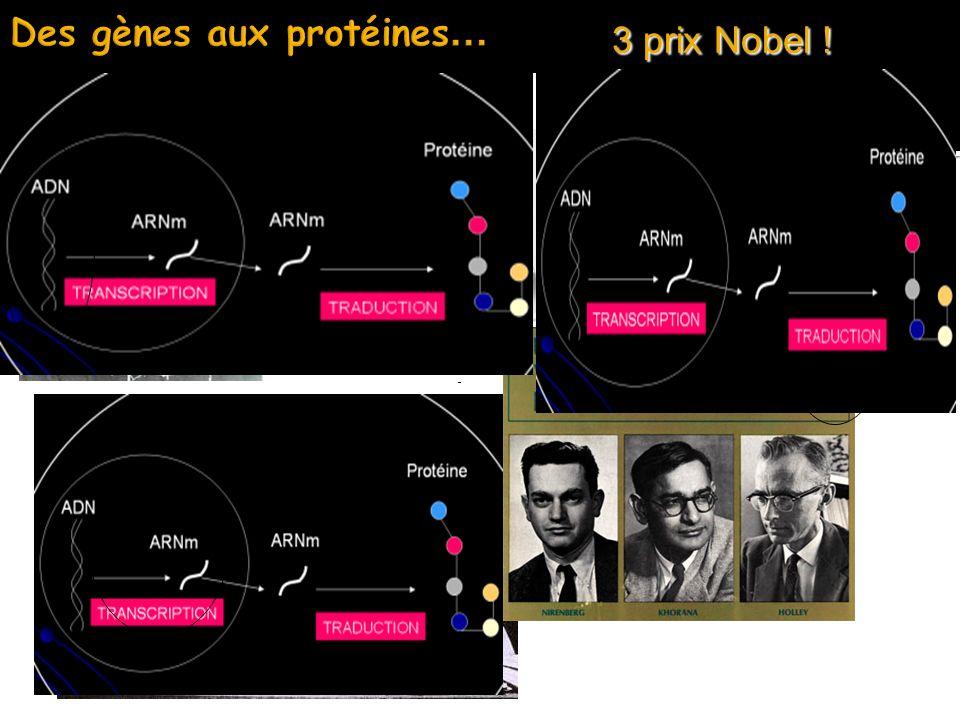 Des gènes aux protéines...