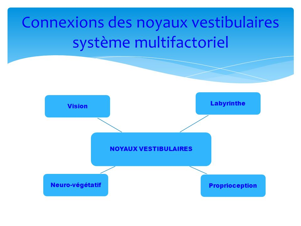 Connexions des noyaux vestibulaires système multifactoriel