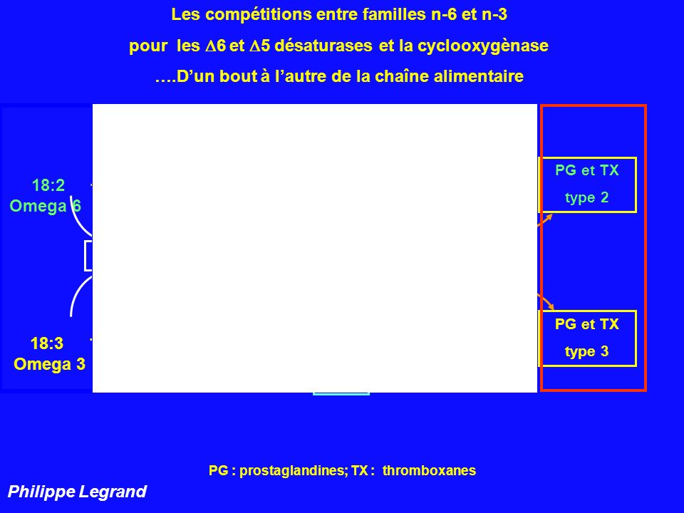 n- 6 n - 3 Les compétitions entre familles n-6 et n-3