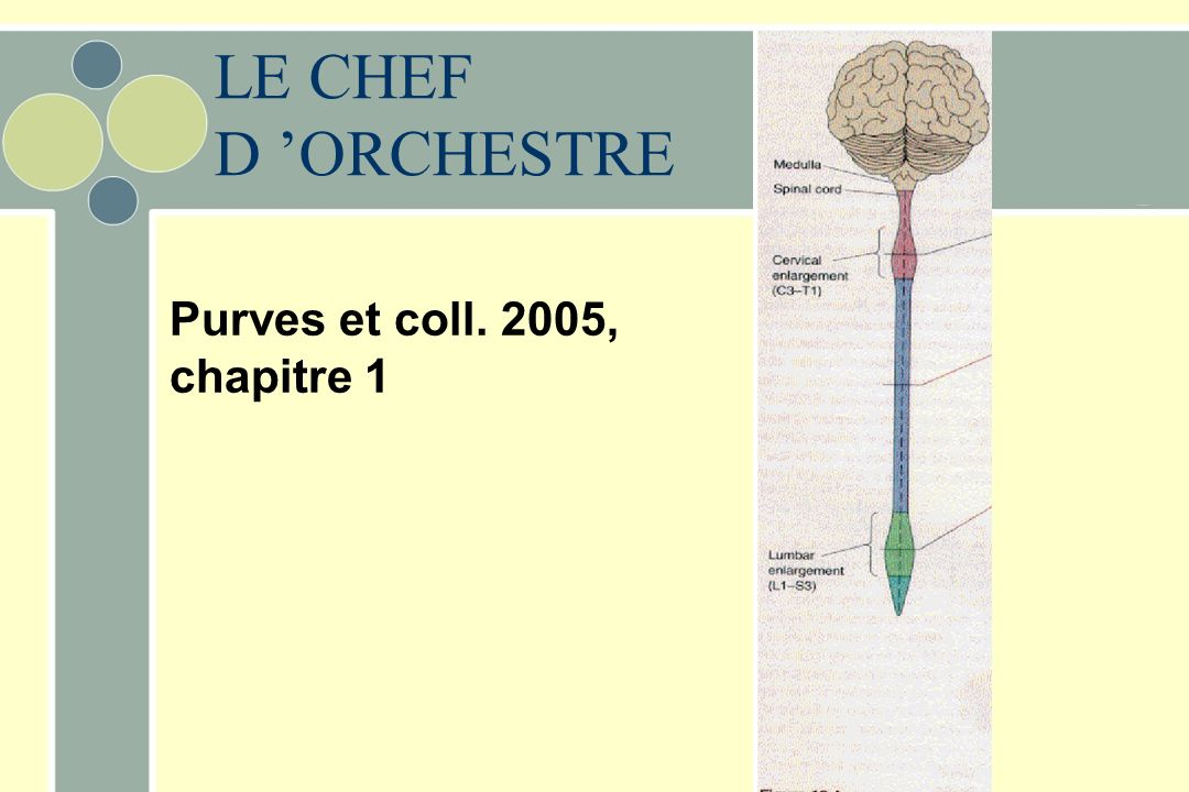 LE CHEF D 'ORCHESTRE Purves et coll. 2005, chapitre 1