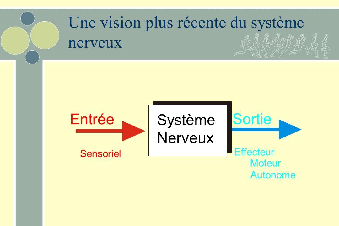 Une vision plus récente du système nerveux
