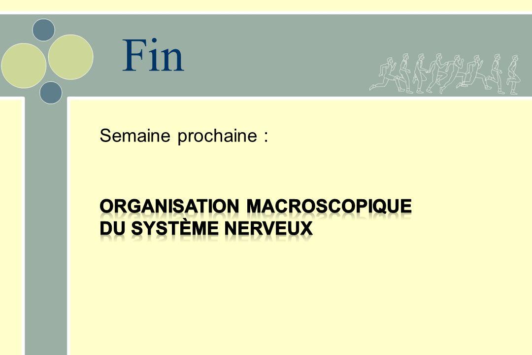 Fin Semaine prochaine : Organisation macroscopique du système nerveux