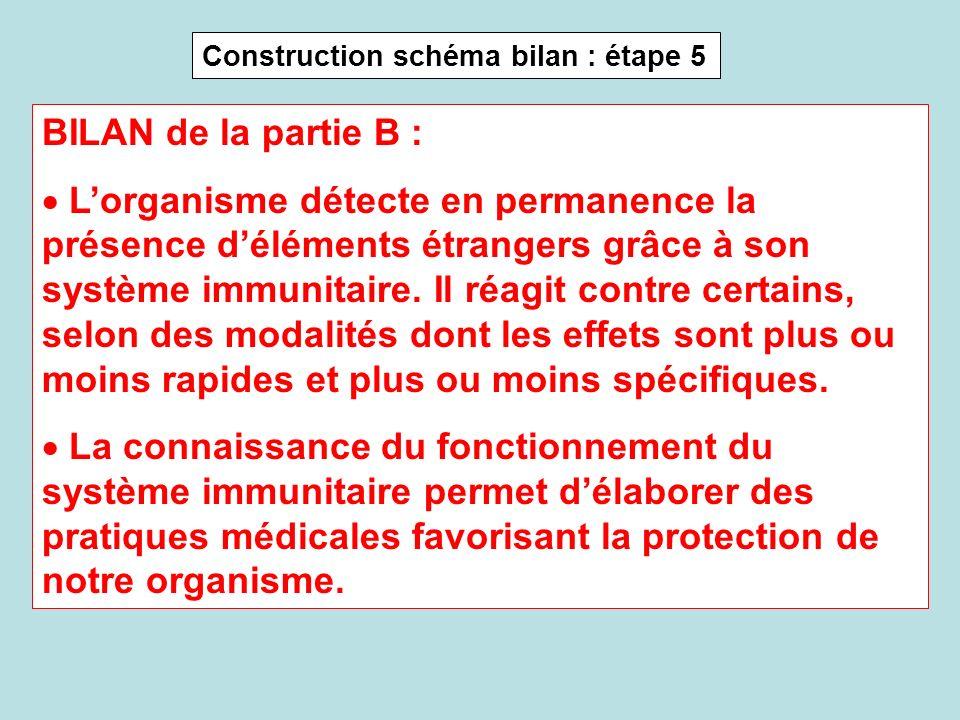 Construction schéma bilan : étape 5