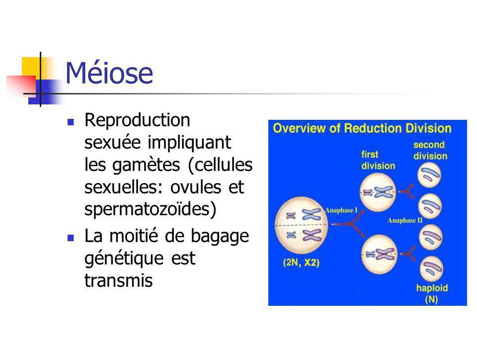 Méiose Reproduction sexuée impliquant les gamètes (cellules sexuelles: ovules et spermatozoïdes) La moitié de bagage génétique est transmis.
