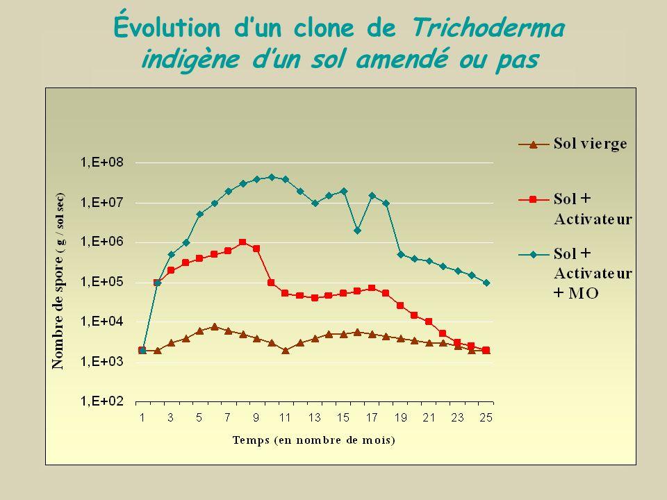 Évolution d'un clone de Trichoderma indigène d'un sol amendé ou pas