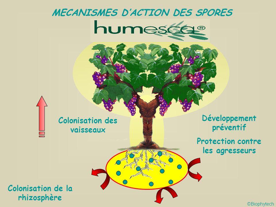 MECANISMES D'ACTION DES SPORES
