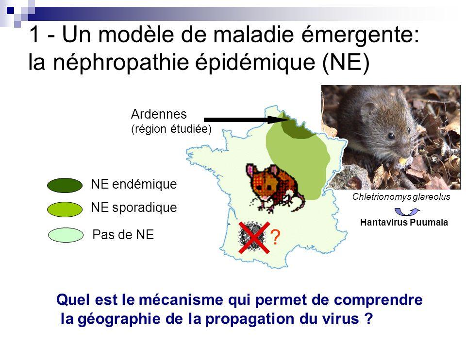1 - Un modèle de maladie émergente: la néphropathie épidémique (NE)