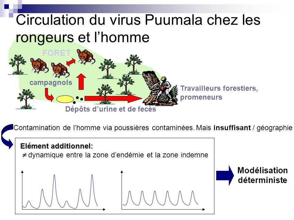 Circulation du virus Puumala chez les rongeurs et l'homme
