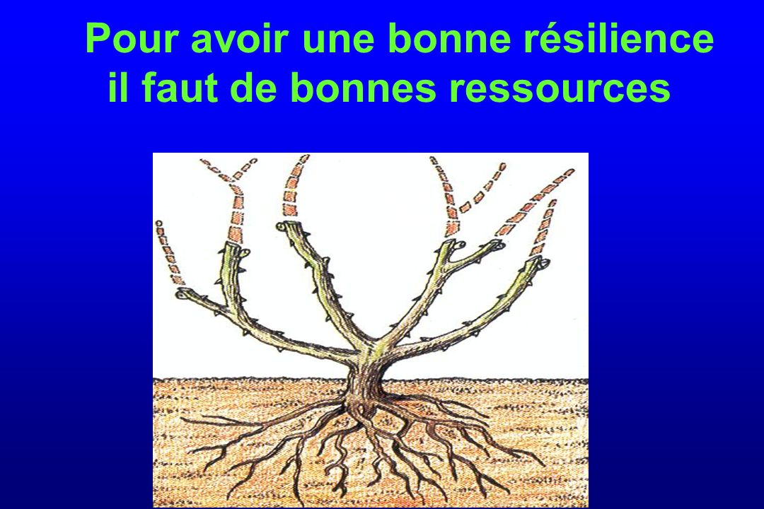 Pour avoir une bonne résilience il faut de bonnes ressources