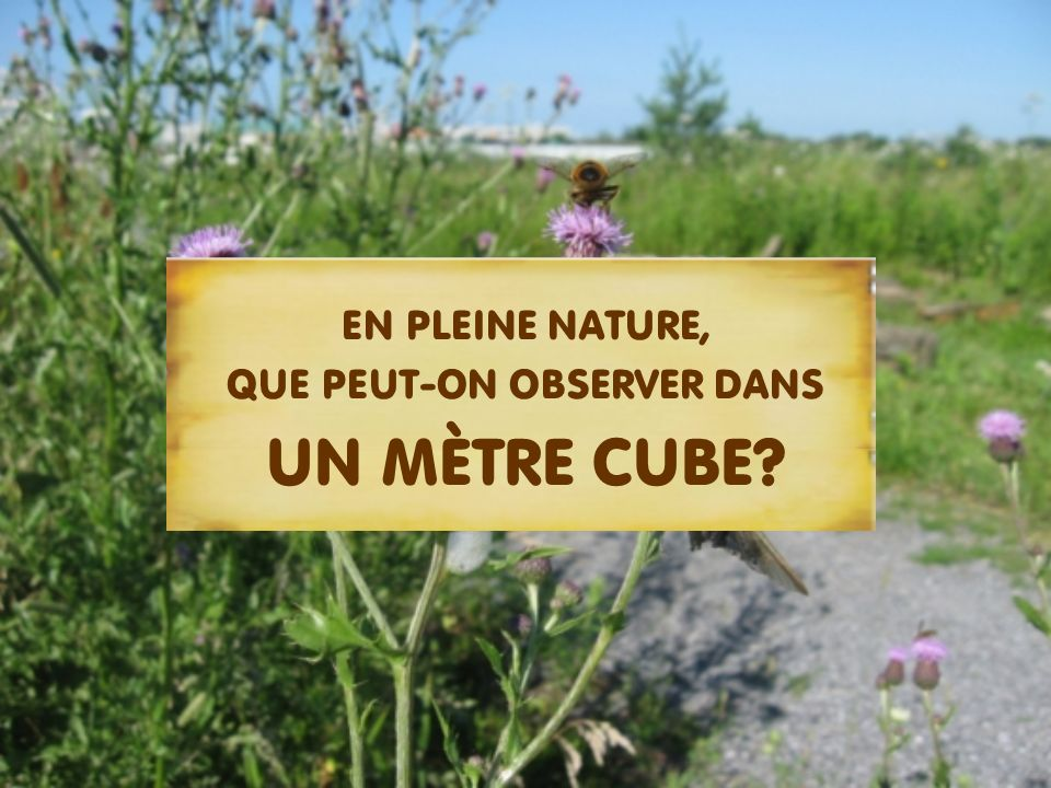 EN PLEINE NATURE, QUE PEUT-ON OBSERVER DANS UN MÈTRE CUBE