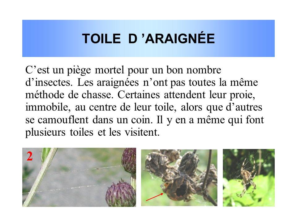 TOILE D 'ARAIGNÉE 2 C'est un piège mortel pour un bon nombre