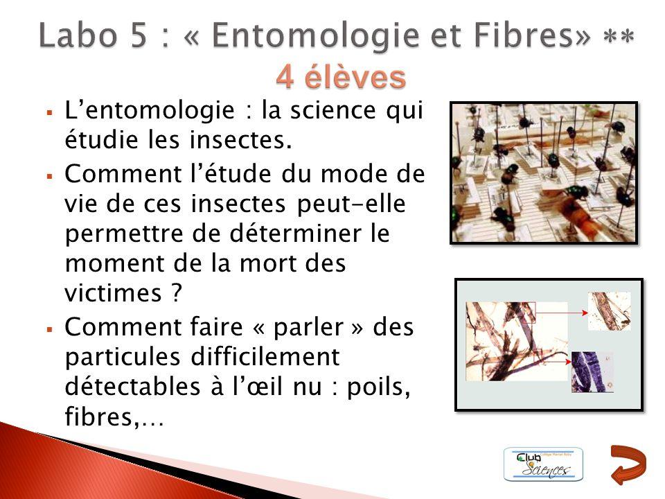 Labo 5 : « Entomologie et Fibres» ** 4 élèves