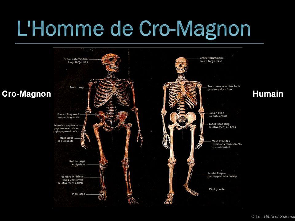 L Homme de Cro-Magnon Cro-Magnon Humain O.Le - Bible et Science