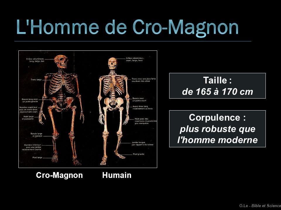 L Homme de Cro-Magnon Taille : de 165 à 170 cm Corpulence :