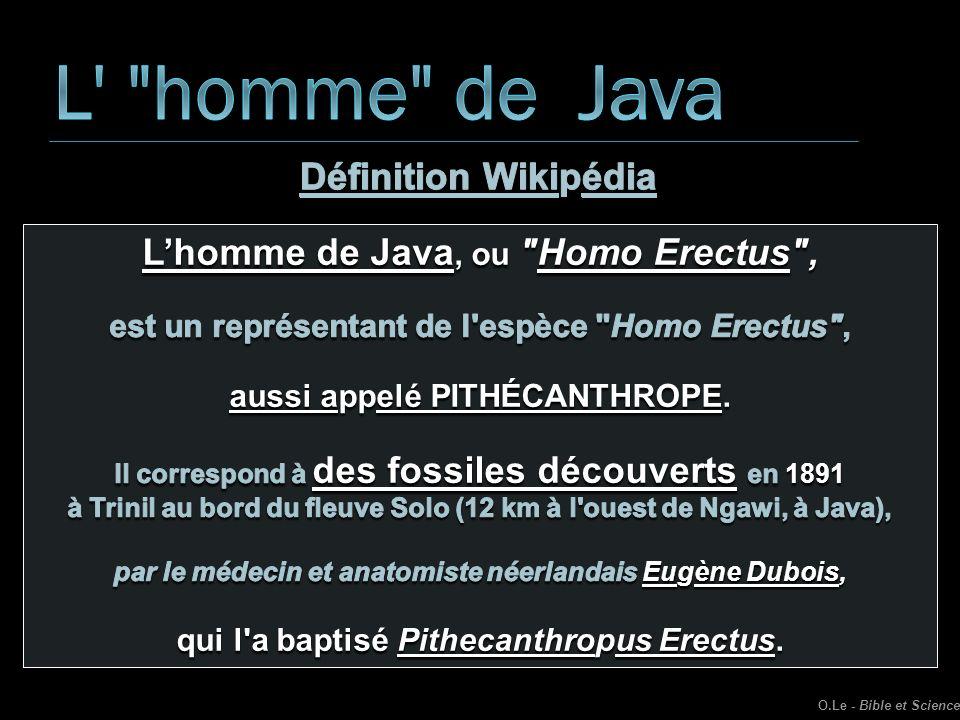 L homme de Java Définition Wikipédia