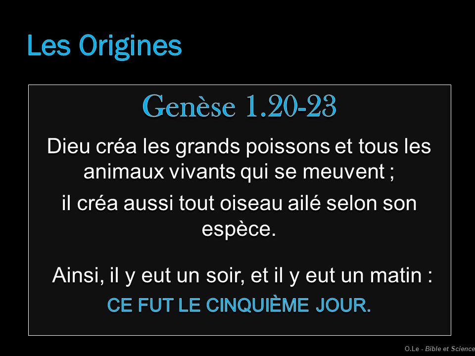 Les Origines Genèse 1.20-23. Dieu créa les grands poissons et tous les animaux vivants qui se meuvent ;