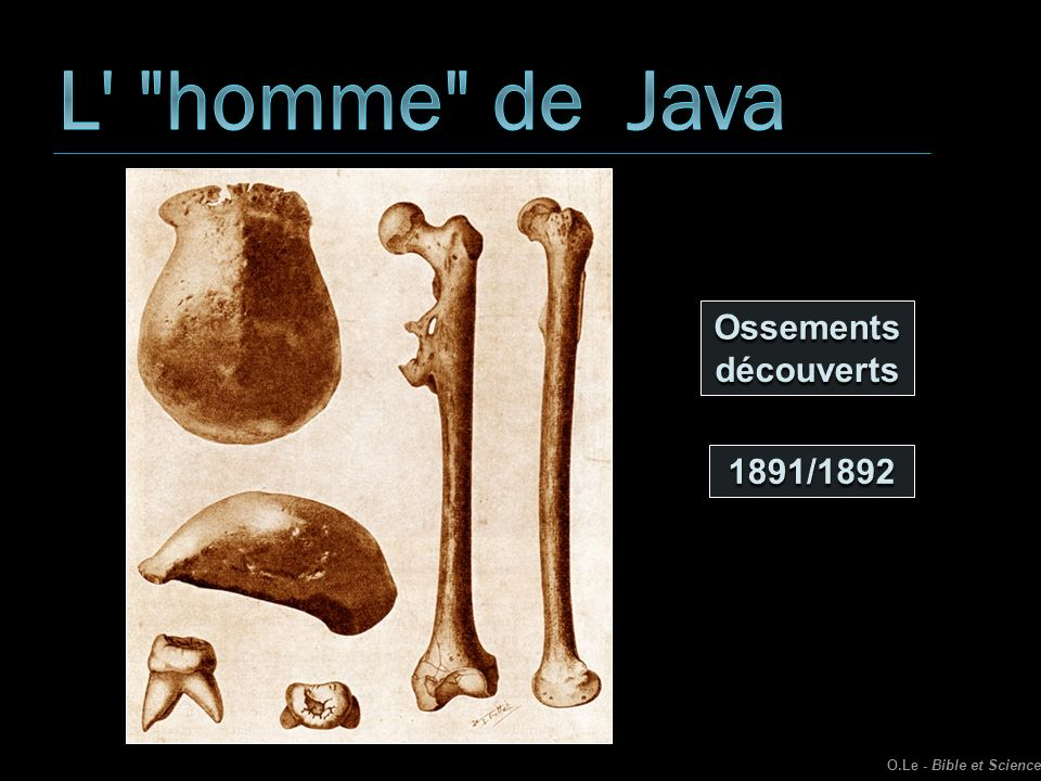 L homme de Java Ossements découverts 1891/1892
